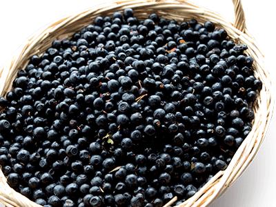 blueberry2_1
