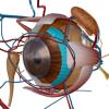 眼精疲労とは?疲れ目との違い&発生メカニズムや原因・改善対策の方法は?